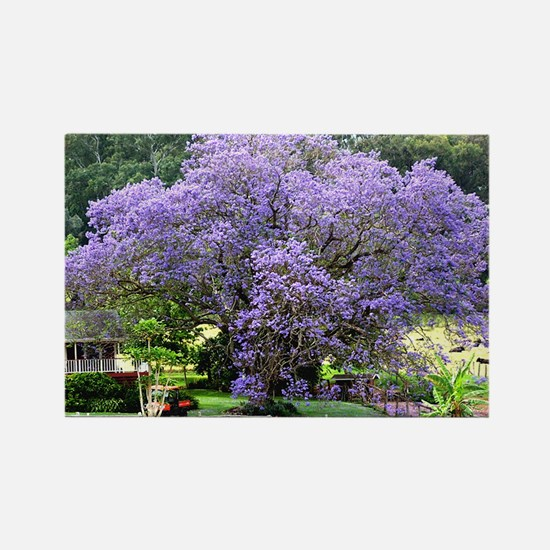 postcard upcountry jacaranda Rectangle Magnet