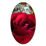 Red Rose Sticker (Oval)