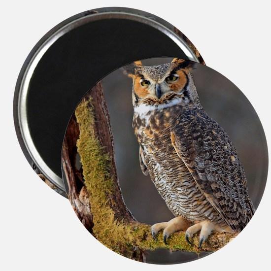 Hoot OWL Magnet