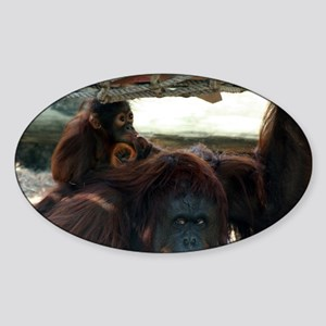 Orangutans Sticker (Oval)