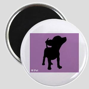 Chihuahua iPet Magnet