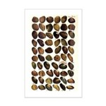 Freshwater Mussel's Mini Poster Print
