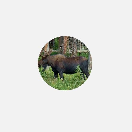 Wildlife, Bull Moose, Photography, Fra Mini Button