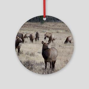 Elk Round Ornament