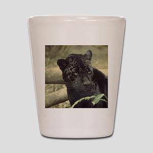 cat-ron.singer1001 Shot Glass