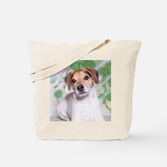 IMG_5832 Coaster Tote Bag