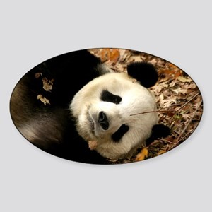 Tai Shan resting in leaves Oval Sticker