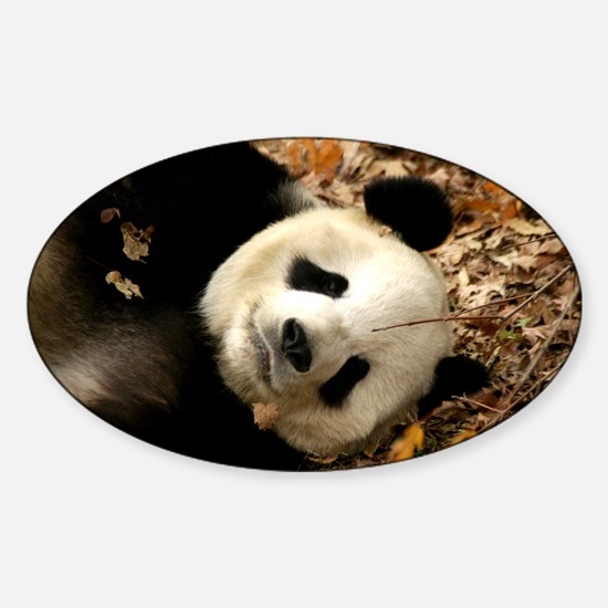 Tai Shan resting in leaves Oval Decal