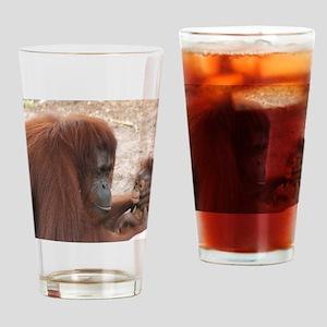 Orangs Drinking Glass