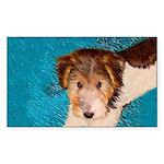 Wire Fox Terrier Puppy Sticker (Rectangle 50 pk)