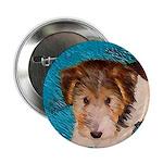 Wire Fox Terrier Puppy 2.25