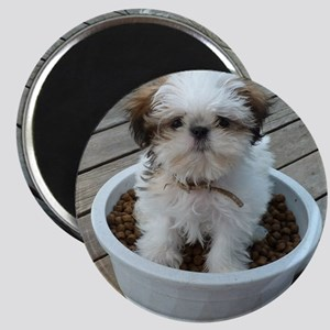 Shih Tzu Puppy in Bowl Magnet