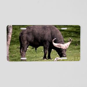 (6) Cape Buffalo Eating Aluminum License Plate