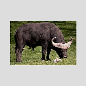 (10) Cape Buffalo Eating Rectangle Magnet