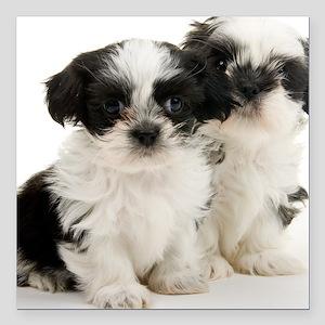 "Two Shih Tzu Puppies Square Car Magnet 3"" x 3"""