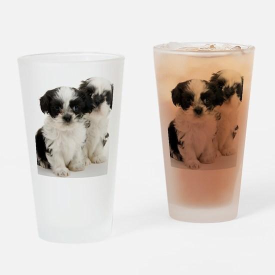 Two Shih Tzu Puppies Drinking Glass