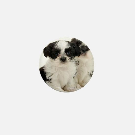 Two Shih Tzu Puppies Mini Button