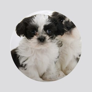 Two Shih Tzu Puppies Round Ornament