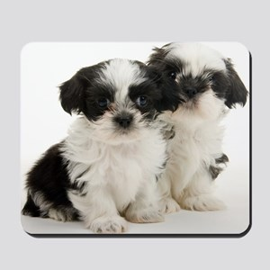 Two Shih Tzu Puppies Mousepad