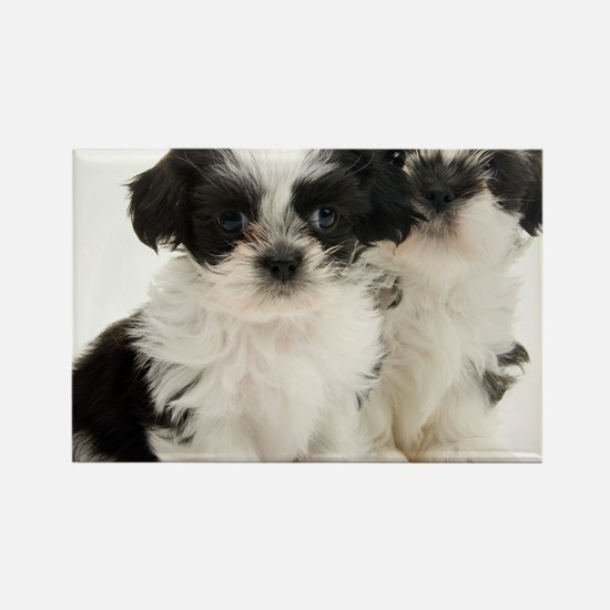 Two Shih Tzu Puppies Rectangle Magnet
