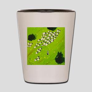 sheep herd melissa ryan Shot Glass