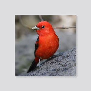 """Tanager Square Sticker 3"""" x 3"""""""