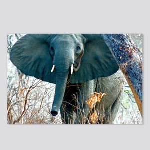 Baby Elephant Postcards (Package of 8)