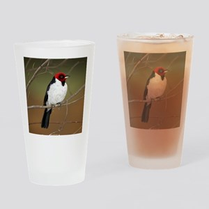 Red-capped Cardinal Drinking Glass