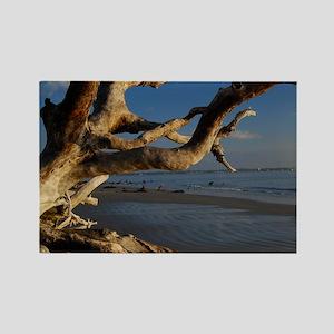 driftwood beach2 Rectangle Magnet