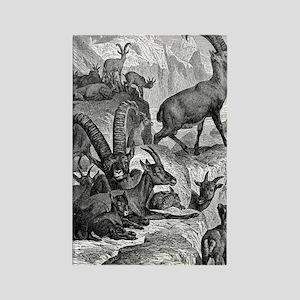 European Ibex Rectangle Magnet