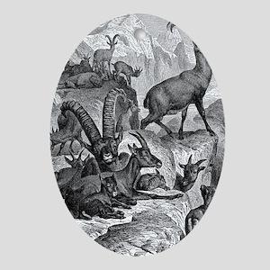 European Ibex Oval Ornament