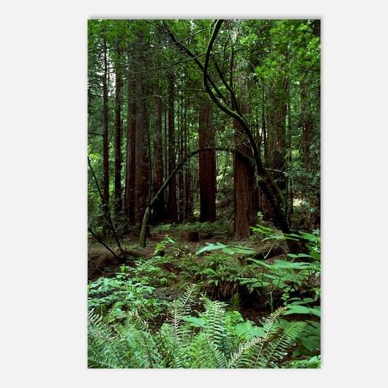 Muir Woods Postcards (Package of 8)