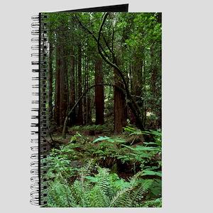 Muir Woods Journal