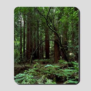 Muir Woods Mousepad