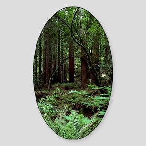 Muir Woods Oval Sticker