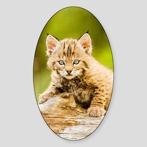 BabyBobcat-Notebook Sticker (Oval)