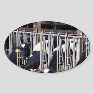 However this farm provides cows and Sticker (Oval)
