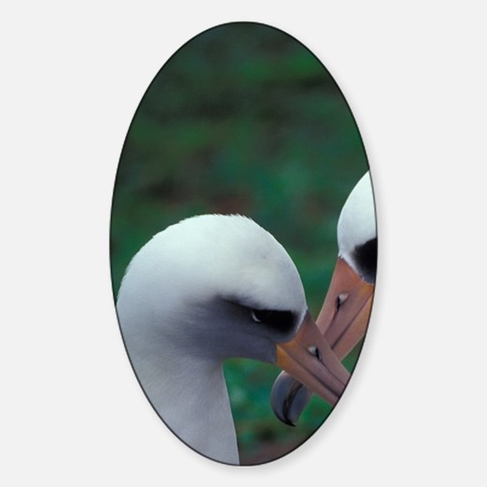 Atoll NWR. Pair of laysan albatross Sticker (Oval)