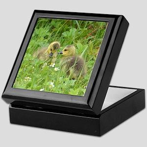 Goslings in clover Keepsake Box