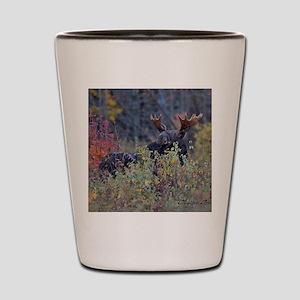 9x7 Shot Glass