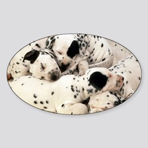 Dalmation sm fr pan print Sticker (Oval)
