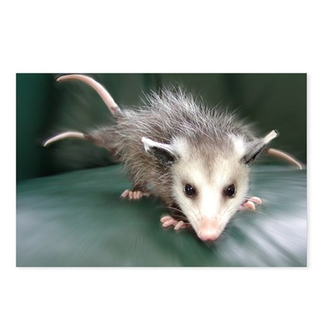 Three-Tailed Possum Postcards (Package of 8)