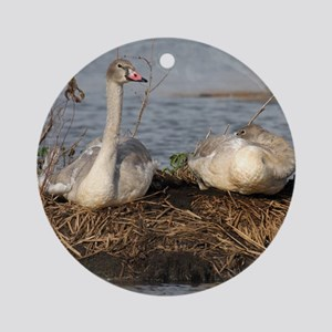 Trumpeter Swan MP Round Ornament