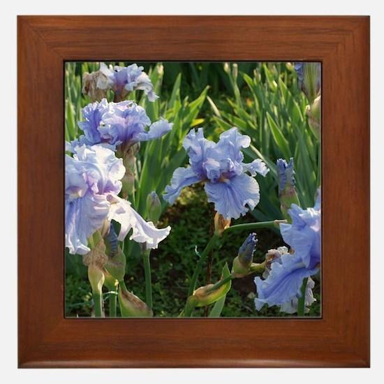 Delicate light blue irises Framed Tile