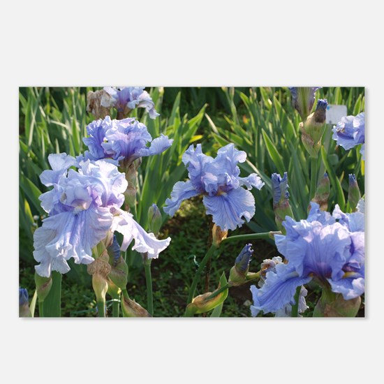 Delicate light blue irise Postcards (Package of 8)
