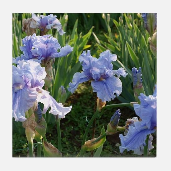 Delicate light blue irises Tile Coaster