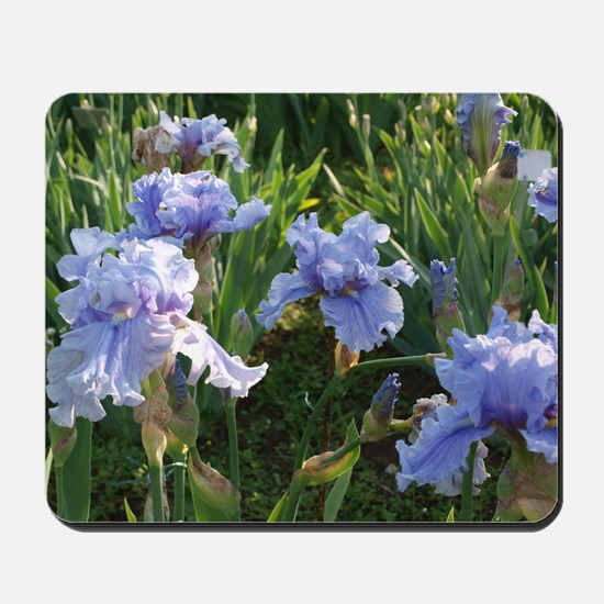 Delicate light blue irises Mousepad