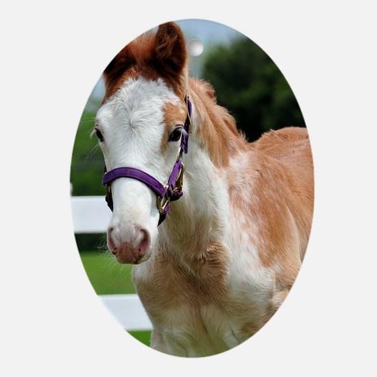 roan_foal_sticker Oval Ornament