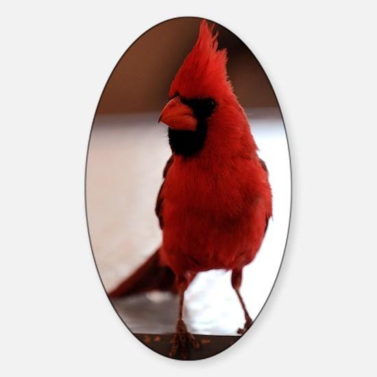 cardinal_card Sticker (Oval)