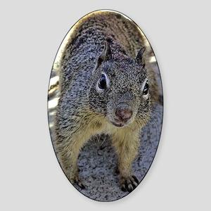 squirrel_panel Sticker (Oval)